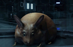 Mass Effect: Andromeda Guide - How to get Your Own Space Hamster