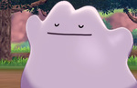 Pokemon Sword and Shield: where to find a Ditto